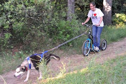Dogscootering is becoming a favorite activity for dog owners.